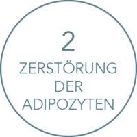Wirkung Kryolipolyse Behandlung: Zerstörung der Adipozyten
