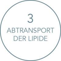 Wirkung Kryolipolyse Behandlung: Abtransport der Lipide
