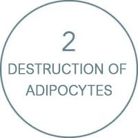 destruction-of-adipocytes